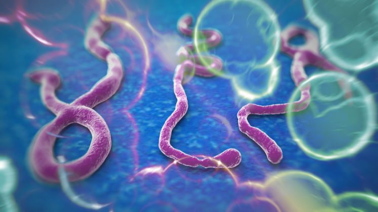 ebola virus disease treatment and vaccines