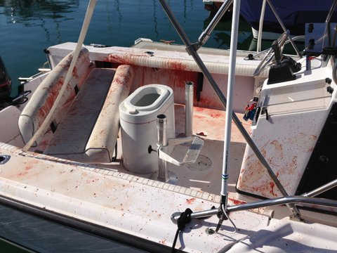 A 6-foot dolphin jumped into a family's Boston Whaler on Father's Day, causing chaos in Dana Point. Blood was everywhere on the boat as the dolphin thrashed around.