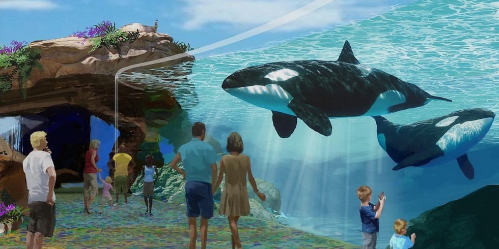 Officials today approved a $100 Million plan by SeaWorld San Diego to double the size of its killer whale tanks, but banned any future breeding of the whales. Protesters wanted the captive whales released into the ocean.