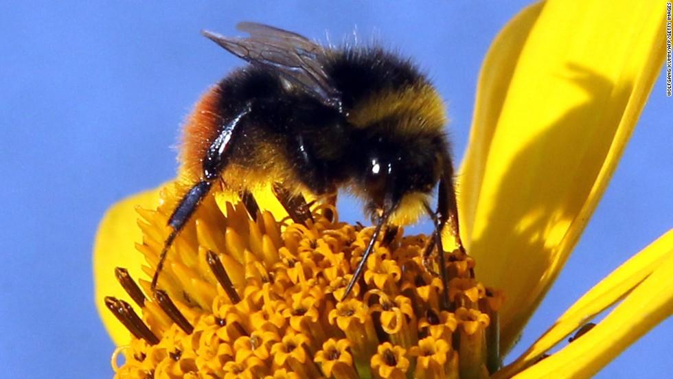 130402133606-flottum-bee-flower-horizontal-large-gallery