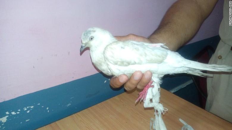 150530010734-india-suspected-spy-pigeon-exlarge-169