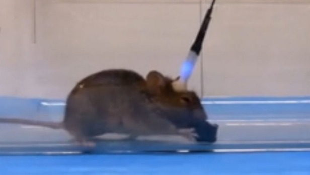 WATCH: Scientists used light to turn mice into stone-cold killers - Breaking911